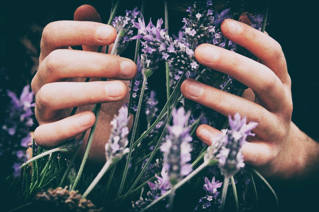 hands holding purple flowers