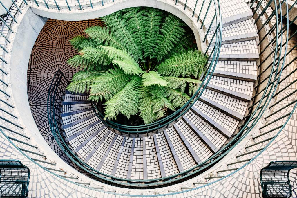 giant fern-like plant surrounded by spiral staircase